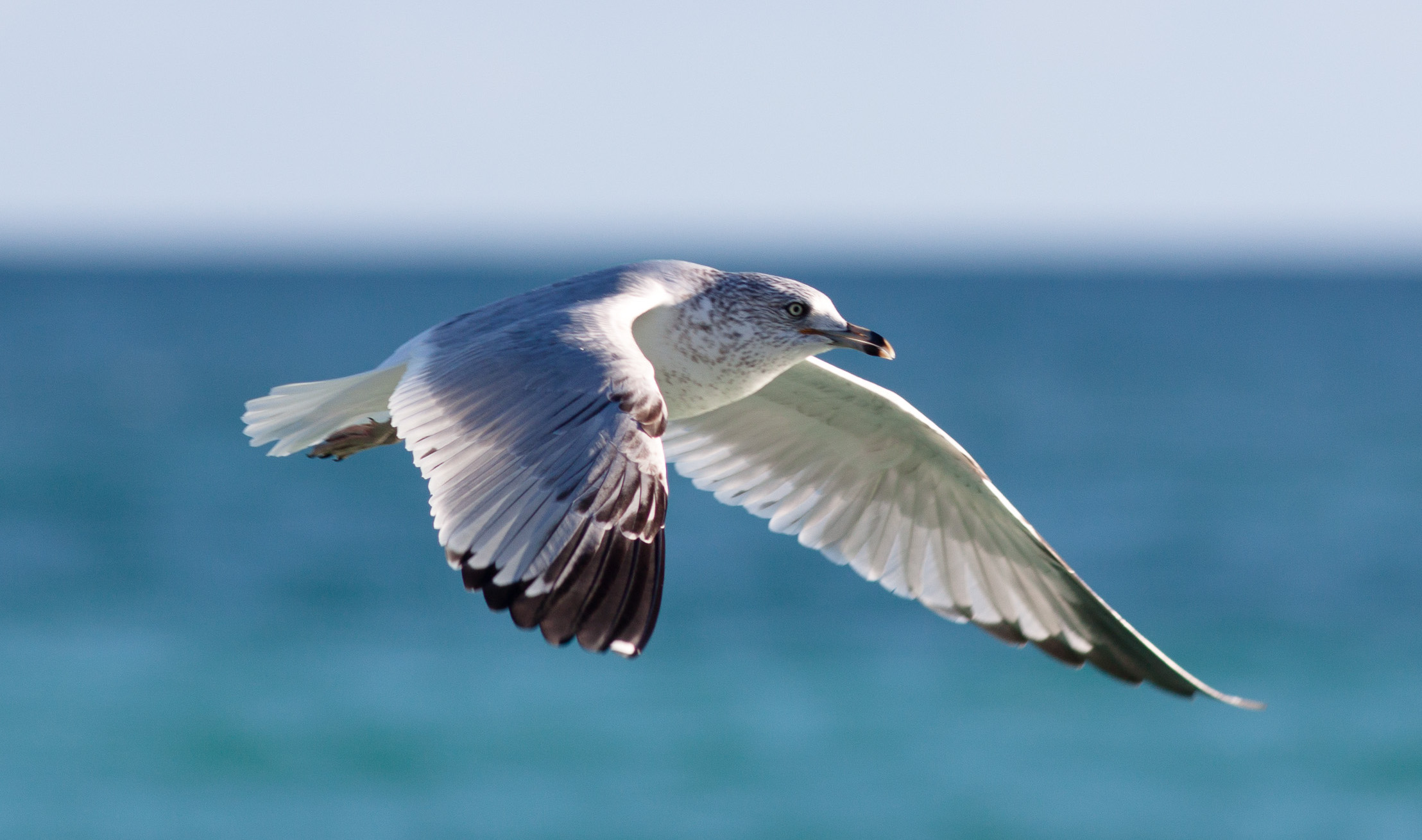 Seagull by Fil.Al is lincensed under CC BY 2.0